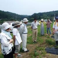 トウキ栽培・利用検討会開催