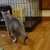 保護猫の血液検査