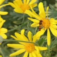 5月の作業日:植栽の剪定他と咲いている花たち