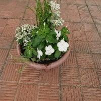 夏色色って?白い植物はどう?