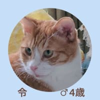 参加猫さん、ご紹介!