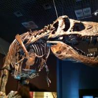 背骨の特徴が名前の由来になった恐竜