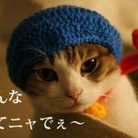 4/12(土)13(日)新・猫の學校@大阪 受講生募集中!