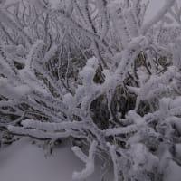 【大雪山国立公園・旭岳情報】冬の始まり