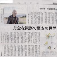 〔310〕続・矢部顕さんのお便り「小学校の脱穀作業」と『稲と日本人』(甲斐信枝著、福音館書店)の書評です。