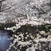 桜プロムナード 自由が丘から桜新町へ