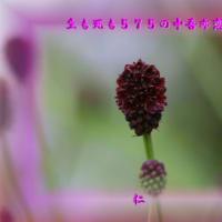 『 生も死も575の中吾亦恋 』恋知575交心zsr1007
