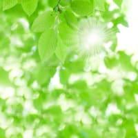のびやかにひとの若さを愛づることを舞台の果てと知りぬ新緑