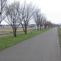 今日の散歩