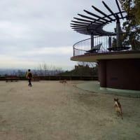 ワンコ散歩に最適!甲山森林公園