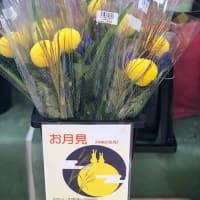 ピンポン菊だって。