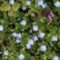 青空と野の花