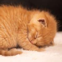 解体現場から猫の赤ちゃん