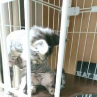 保護猫こむぎの日記