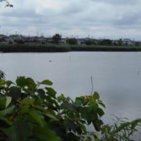 てくてく太田川を行く⑦ 〔磐田市・大池〕