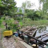 小舟が浮かぶ かじ池で紫陽花が満開に