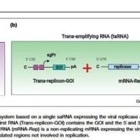 アルファーウイルスの自己複製RNAを利用した新世代のワクチン María Cristina Ballesteros-Briones et al