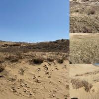 快晴☀️ 砂丘から大山