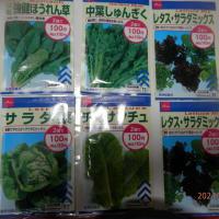 秋野菜用種購入
