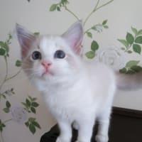 子猫の家族募集中です(*´∀`)
