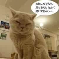 福猫茶房さん : 2月21日 見せるだけ・・・。