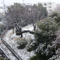 横浜ではまた雪