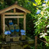 北鎌倉 明月院ブルー