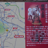 水仙咲く国際音楽村周辺は、真田徳川の合戦場だった。