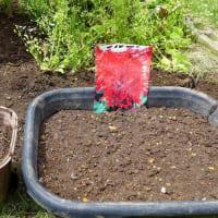 五月の猫ビタイ庭の園芸・・・サルビアとマリーゴールドの種を蒔いた