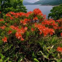オレンジ色の野反湖