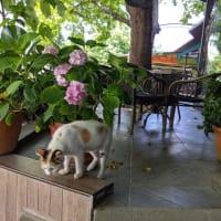 珈琲と猫とおじさん