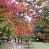 晩秋の色…皇帝ダリアなど