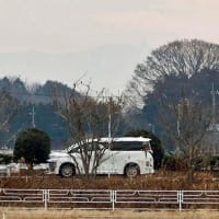 農村冬景色 欅に筑波山