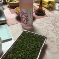 4月16日(火)花山椒鍋