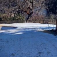 昨夜から今朝に掛けての積雪は