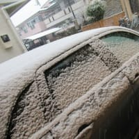 なごり雪 (・ω・)
