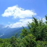 2019/06/25(火) 千石城山 カモシカと鉢合わせ