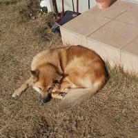 陽を浴びた 洗濯物が 犬枕…