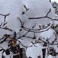 2月の庭雪(2)