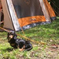 久々キャンプ
