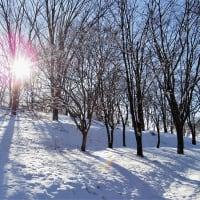 雪色の森。