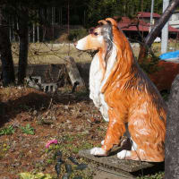サングラスの犬