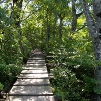 行者谷の木道