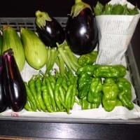 有機野菜たち