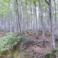 Mi vizitis montan regionon por spekti kolorigitajn foliojn