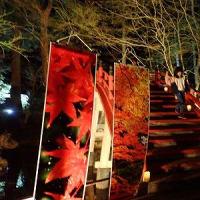 2月28日(日)世羅の夜のイベント!最終日に行ってみました。昔同じような事をHINANOでやろうと思ったが、断念。よくぞここまで作ったなー。凄い!!