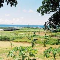 1990年代の沖縄旅行 「ひめゆり」戦跡巡り③ 糸洲第二外科壕跡②