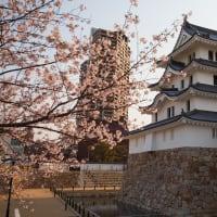 桜の尼崎城(計42枚)