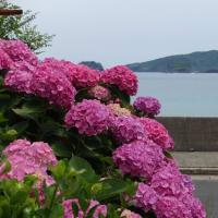海辺に咲く、花