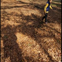 落ち葉を踏みにいこう